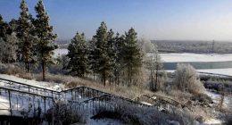 Zima31